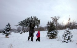 CHRISTMAS TREE—Tony Baker and his daughter, Mesa, took away a Christmas tree from Rum River Tree Farm in Anoka, MI, Dec. 8. (CNS photo/Eric Miller, Reuters)